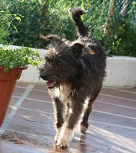 VIOLETA, Hund, Podengo-Mix in Portugal - Bild 3