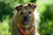 ELZA, Hund, Norfolk Terrier-Mix in Pforzheim - Bild 1