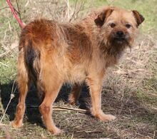 ELZA, Hund, Norfolk Terrier-Mix in Pforzheim - Bild 10
