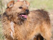 ELZA, Hund, Norfolk Terrier-Mix in Pforzheim - Bild 11
