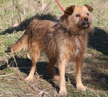 ELZA, Hund, Norfolk Terrier-Mix in Pforzheim - Bild 13