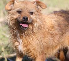 ELZA, Hund, Norfolk Terrier-Mix in Pforzheim - Bild 15