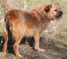 ELZA, Hund, Norfolk Terrier-Mix in Pforzheim - Bild 16