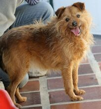 ELZA, Hund, Norfolk Terrier-Mix in Pforzheim - Bild 17