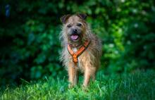 ELZA, Hund, Norfolk Terrier-Mix in Pforzheim - Bild 2