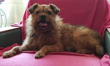 ELZA, Hund, Norfolk Terrier-Mix in Pforzheim - Bild 6