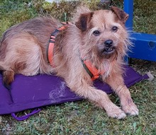 ELZA, Hund, Norfolk Terrier-Mix in Pforzheim - Bild 7