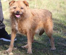 ELZA, Hund, Norfolk Terrier-Mix in Pforzheim - Bild 8