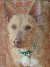 NESTLE, Hund, Podenco in Spanien - Bild 2