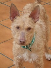 NESTLE, Hund, Podenco in Spanien - Bild 4