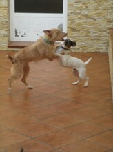 NESTLE, Hund, Podenco in Spanien - Bild 6