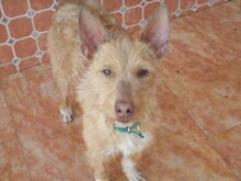 NESTLE, Hund, Podenco in Spanien - Bild 7