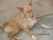NESTLE, Hund, Podenco in Spanien - Bild 8