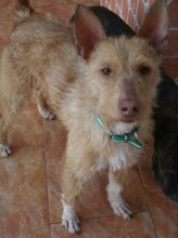 NESTLE, Hund, Podenco in Spanien - Bild 9