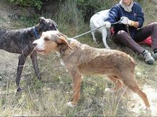 DOLY, Hund, Terrier-Mix in Spanien - Bild 10
