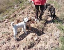 DOLY, Hund, Terrier-Mix in Spanien - Bild 3