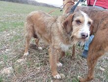 DOLY, Hund, Terrier-Mix in Spanien - Bild 5