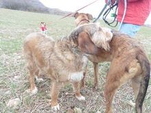 DOLY, Hund, Terrier-Mix in Spanien - Bild 6