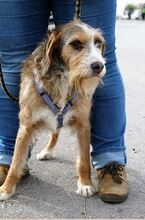 DOLY, Hund, Terrier-Mix in Spanien - Bild 7