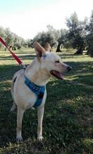 RICKY, Hund, Podenco-Mix in Spanien - Bild 6