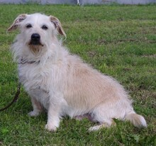SAMMY, Hund, Terrier-Mix in Kronach - Bild 4