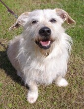 SAMMY, Hund, Terrier-Mix in Kronach - Bild 9