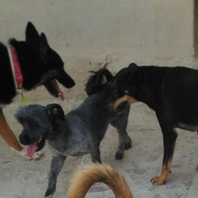 BARBIE, Hund, Tibet Terrier in Spanien - Bild 2