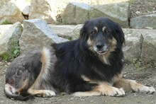 MAIKA, Hund, Hovawart-Mix in Gefrees - Bild 5