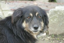 MAIKA, Hund, Hovawart-Mix in Gefrees - Bild 7