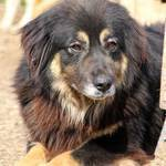 MAIKA, Hund, Hovawart-Mix in Gefrees - Bild 9