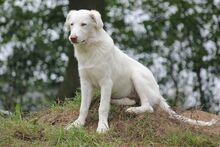 MARYLIN, Hund, Maremmano-Mix in Züssow - Bild 4