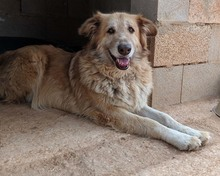 MARA, Hund, Golden Retriever-Mix in Spanien - Bild 10