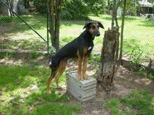 NEMO, Hund, Mischlingshund in Worms - Bild 8