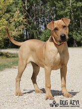 WILSON, Hund, Shar Pei-Mix in Slowakische Republik - Bild 2
