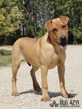 WILSON, Hund, Shar Pei-Mix in Slowakische Republik - Bild 3