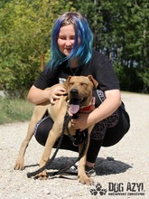 WILSON, Hund, Shar Pei-Mix in Slowakische Republik - Bild 5
