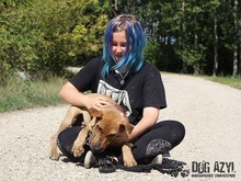 WILSON, Hund, Shar Pei-Mix in Slowakische Republik - Bild 6
