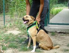 BLONDY, Hund, Labrador-Mix in Lautertal - Bild 8