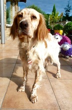 SUMMER, Hund, Mischlingshund in Ratingen - Bild 11