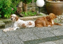 SUMMER, Hund, Mischlingshund in Ratingen - Bild 15