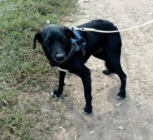 MANCI, Hund, Labrador-Mix in Neuss - Bild 6
