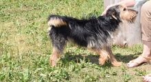 RICKY, Hund, Terrier-Mix in Slowakische Republik - Bild 2