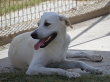 LISA, Hund, Labrador-Mix in Spanien - Bild 9