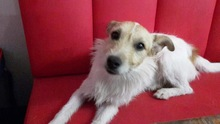 FRODO, Hund, Terrier-Mix in Hannover - Bild 1