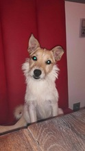 FRODO, Hund, Terrier-Mix in Hannover - Bild 2