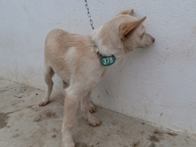 NEBRASKA, Hund, Podenco-Mix in Spanien - Bild 12