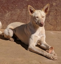 NEBRASKA, Hund, Podenco-Mix in Spanien - Bild 14
