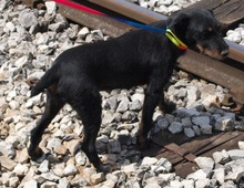 LILA, Hund, Terrier-Mix in Kroatien - Bild 5