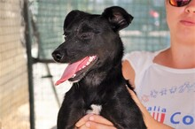 ASTRID, Hund, Pinscher-Mix in Italien - Bild 2
