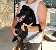 ASTRID, Hund, Pinscher-Mix in Italien - Bild 3